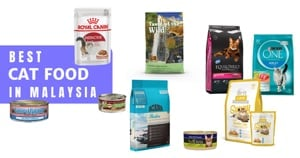 17 Best Cat Food Malaysia 2021: How To Choose (Premium Brands Included)