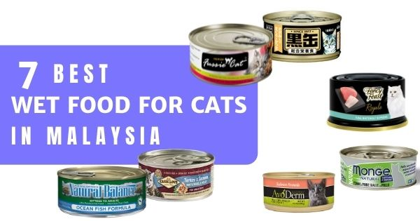 You are currently viewing 7 Best Wet Food For Cats In Malaysia 2021 – For Fussy Felines!