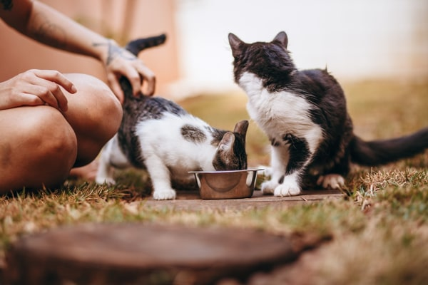 Caring For Multiple Pets Costs More
