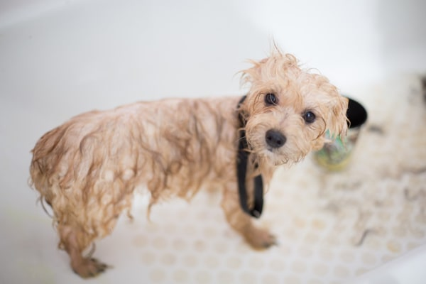 Grooming Can Be Costly If You Don't Plan To Do It Yourself