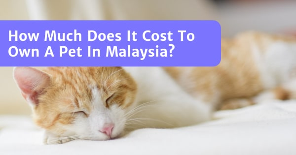 How Much Does It Cost To Own A Pet In Malaysia