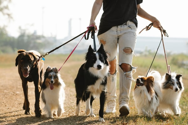 Pet Boarding Is One Option If You Have To Leave Your Pet For A Few Days